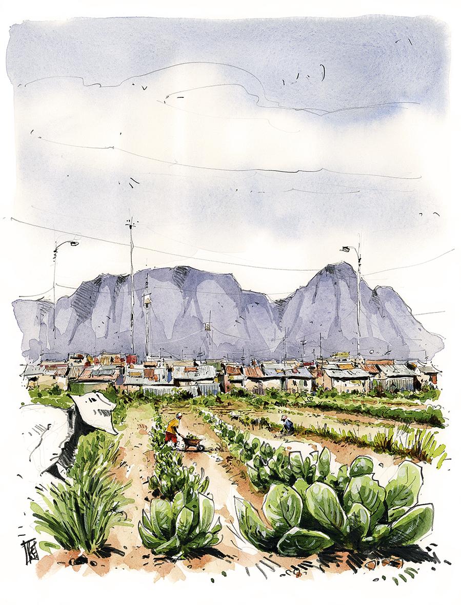 Jardins-Abalimi-Afrique-sud-Ultréia3-Reno-HD_ret