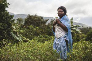 Giovanna, habitante de Mururata travaille dans un champ de coca pres de son village.